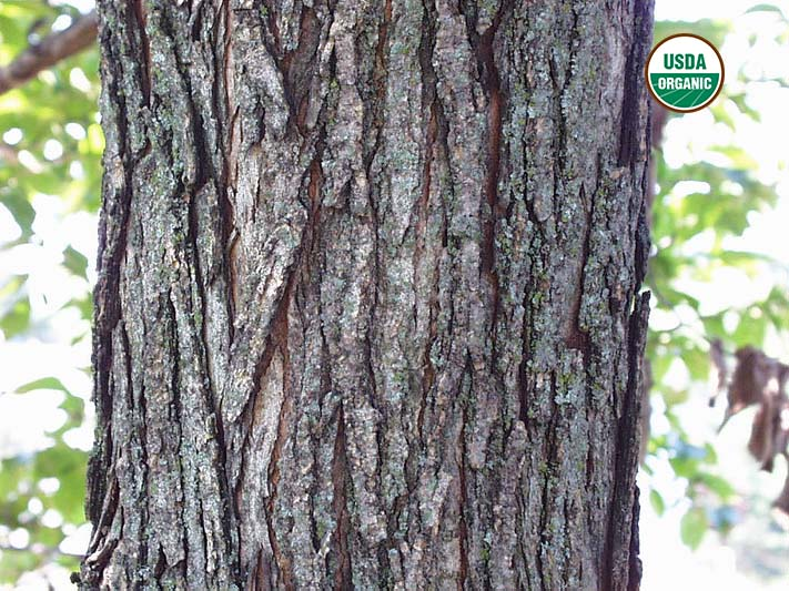 What is slippery elm bark